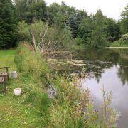 B & B Hejren har egen lille hyggelig fiskesø.